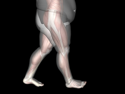 Obesity May Affect the Structure of the Foot